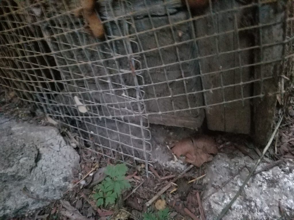 One On One With A Rat Mice Exterminator For Free 425 440